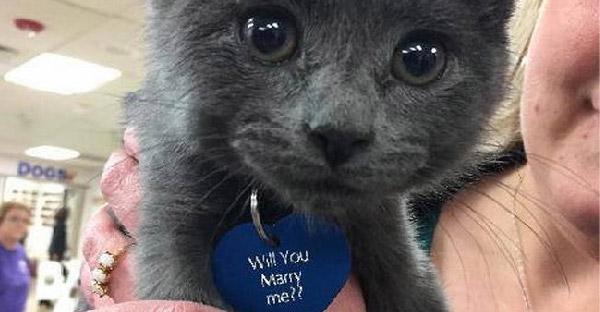 ทาสแมวหัวใสใช้ลูกแมวเป็นสื่อรักขอแต่งงาน จนหญิงสาวยิ้มแก้มปริตอบตกลงทันที!!