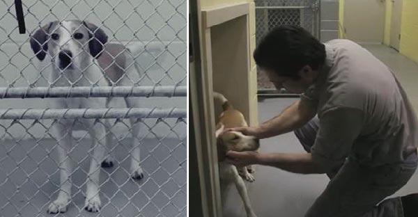 สุนัขรอดตายปาฏิหาริย์จากการการุณยฆาตด้วยแก๊สพิษ..จนโด่งดังไปทั่วอเมริกา