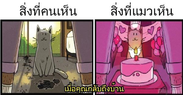 เปรียบเทียบ สิ่งที่คนเห็น กับ สิ่งที่แมวเห็น ดูแล้วแตกต่างกันอย่างสิ้นเชิง