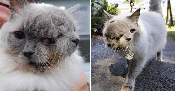 เผยชีวิตของแมวสองหัว แฟรงค์กับลูอี้ ที่มีอายุยืนยาวมากที่สุด