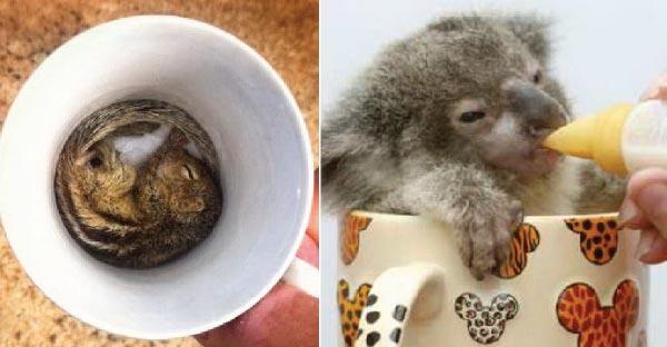 40 ภาพสัตว์ตัวจิ๋วในแก้วกาแฟสุดแสนจะพอดีจริงๆ