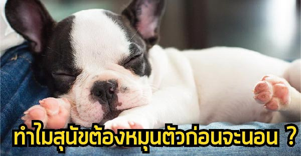 7 เรื่องไม่ธรรมดาของสุนัข ที่คุณอาจยังไม่เคยรู้มาก่อน