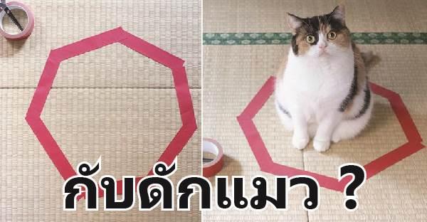 วิทยาศาสตร์ไม่สามารถอธิบายได้ ทำไมแมวต้องเข้าไปนั่งในอาณาเขต