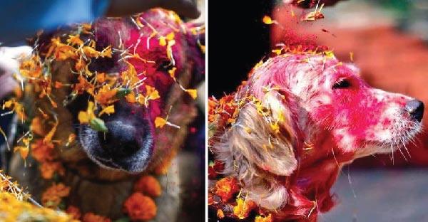 Kukur Tihar เทศกาลเฉลิมฉลองของสุนัข ที่บูชาดั่งเป็นเทพเจ้า !!
