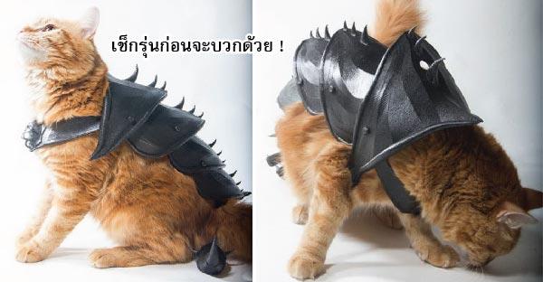 ชุดเกราะสุดคูลล์..ที่จะทำให้แมวของคุณหมดกังวลว่าจะโดนแมวลอบกัดอีกต่อไป !