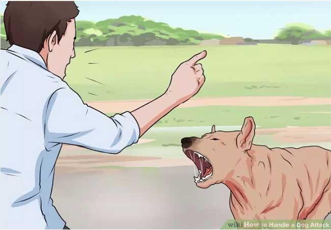 dog-attack5