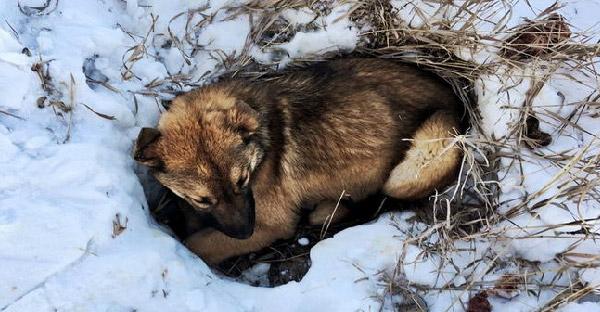 กู้ภัยสัตว์ใช้เวลาค้นหากว่า 12 ชม. เพื่อหาลูกสุนัขที่โดนรถชน กำลังใกล้แข็งตาย