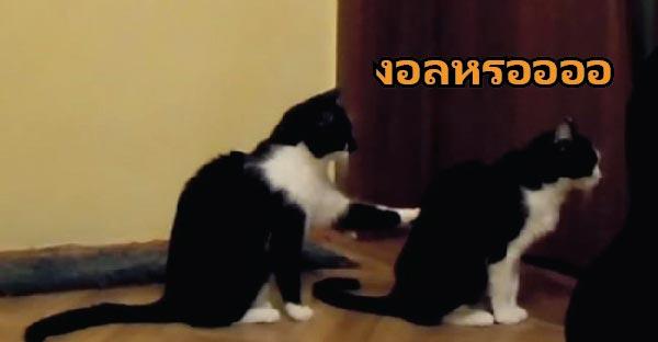 มาชมวิธีง้อแบบเมี๊ยวๆของแมวสองตัวกับตอนจบที่คาดไม่ถึง !