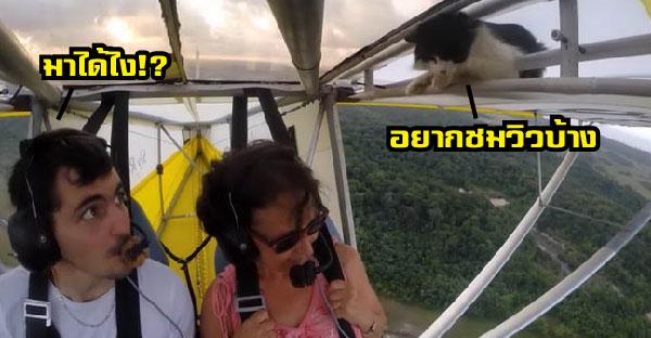 เจ้าเหมียวโผล่เซอร์ไพรซ์บนเครื่องบินชมวิวทิวทัศน์ โชว์ลีลาท้าเวหาแบบไม่ได้รับเชิญ