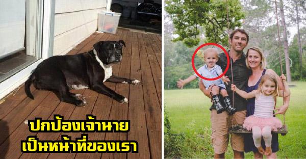 สุนัขแสนรู้เห่าอย่างบ้าคลั่ง เรียกคุณพ่อมาช่วยลูกชายวัย 2 ขวบที่กำลังจมน้ำ