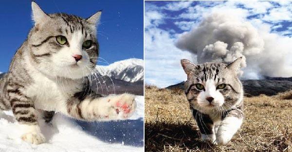 Nyankichi แมวเหมียวภูเขาไฟระเบิด ที่ชาวเนตต่างหลงใหลในมาดความกวนสุดเท่