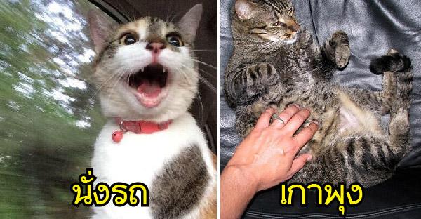 10 เรื่องที่แมวส่วนใหญ่เกลียดมาก แต่บางตัวกลับชอบหน้าตาเฉย