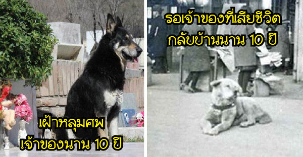9 เรื่องราวของสุนัขที่ซื่อสัตย์ต่อเจ้าของมากที่สุดจนโด่งดังไปทั่วโลก