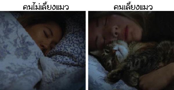 เปรียบเทียบชีวิตใน 1 วันของ คนเลี้ยงแมวกับคนไม่เลี้ยงแมว จะแตกต่างกันขนาดไหนกัน