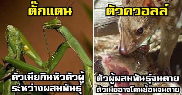 11 การผสมพันธุ์สุดโหดถึงตายของเหล่าสัตว์โลก