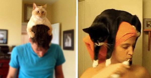 ทำไมแมวชอบมานั่งบนหัวของมนุษย์ เพราะอะไรกันนะ?