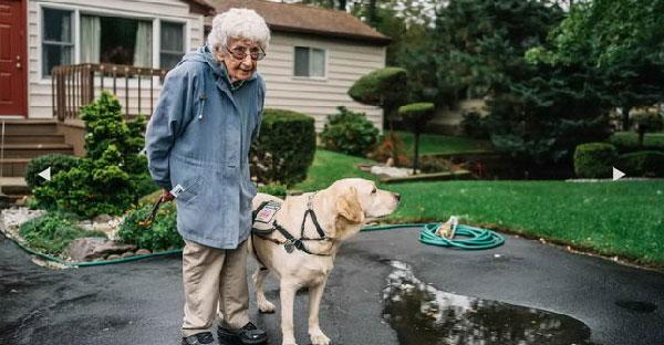 คุณยายโลกส่วนตัวสูงยอมออกจากบ้านอีกครั้ง เพราะได้โกลเด้นแสนรู้ช่วยเปลี่ยนชีวิตของเธอ