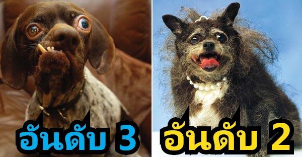 10 อันดับหมาที่น่าเกลียดที่สุดในโลก ! แต่ยังไงเจ้าของก็รักมันนะ ^^