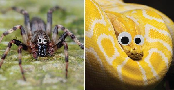 17 ภาพสัตว์น่ากลัวที่จะน่ารักขึ้นมาทันใด เพียงแค่ทำตาแป๋วให้กับมันเท่านั้นเอง