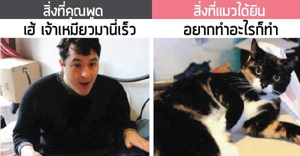 สิ่งที่คุณพูดกับสิ่งที่แมวได้ยินมันช่างแตกต่างกันเสียเหลือเกิน