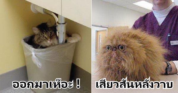 18 ภาพแมวที่กลัวสัตวแพทย์จนต้องทำอะไรแปลกๆ