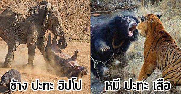 43 ฉากต่อสู้เพื่อความอยู่รอดของเหล่าสัตว์โลก