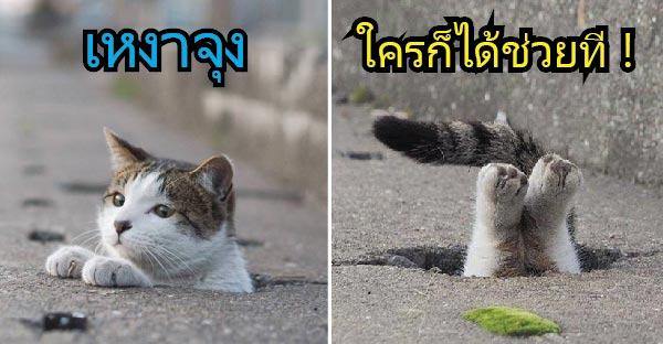 ส่องภาพแมวมุดท่อเล่นกับความน่ารักแสนซนสุดเมี๊ยวม๊าว ^^