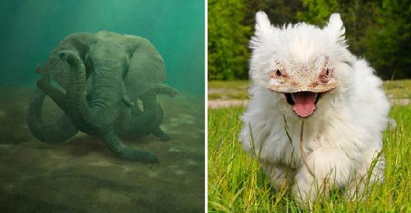 ถ้าสัตว์พันธุ์ผสมในจินตนาการมีชีวิตขึ้นจริง พวกมันจะมีหน้าตายังไงกันบ้าง
