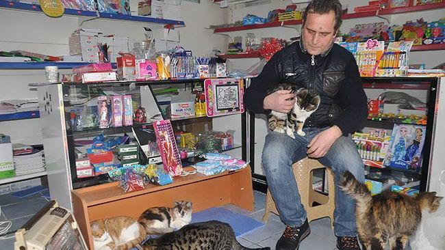 refuge-homeless-cats-shop-snowstorm-istambul-5