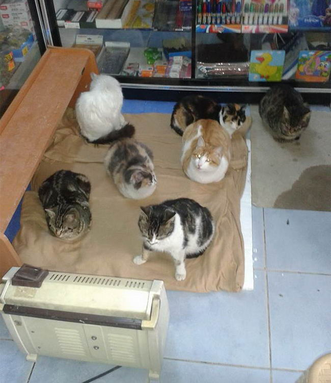 refuge-homeless-cats-shop-snowstorm-istambul-8
