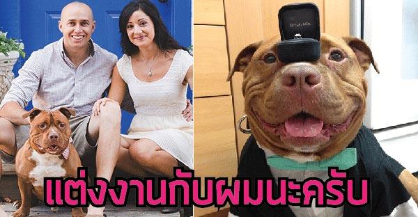 """""""มิทตี้"""" สุนัขผู้เติมเต็มชีวิตและพยานรักของคู่บ่าว-สาว"""
