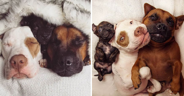 เรื่องราวของหมา 3 เกลอ ต่างวัย ต่างที่มา แต่รักกันยิ่งกว่าพี่น้องแท้ๆเสียอีก