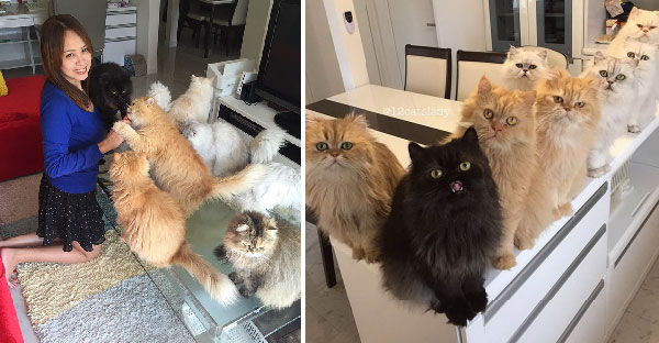 ทาสแมวตัวจริง !! สาวชาวญี่ปุ่นเป็นทาสแมวเปอร์เซีย 12 ตัว