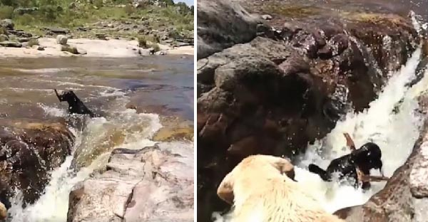 หมาน้อยฮีโร่ช่วยเพื่อนที่จะไหลไปตามน้ำตก ซึ่งมียอดวิวกว่า 37 ล้านวิวแล้ว