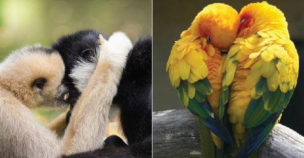 12 คู่ชู้ชื่นของเหล่าสัตว์โลก..ที่สวีทกันไม่เกรงใจคนโสดบ้างเล้ยย