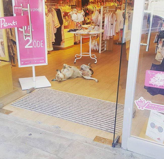 shops-help-stray-animals-istanbul-2-1