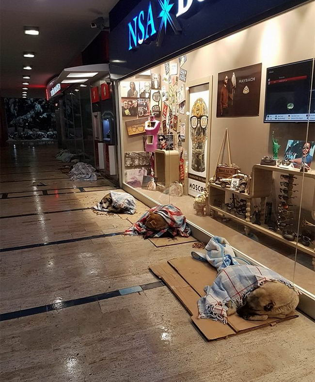 shops-help-stray-animals-istanbul-9-1
