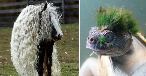 25 ภาพของสัตว์โลกที่มีขนทั้งสวยงามและแปลกประหลาด จนเราต้องยกนิ้วให้เลย