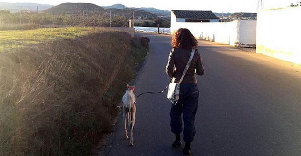 สุนัขขาหักพาหญิงสาวเดินไกลกว่า 3 กิโล เพื่อไปช่วยเหลือลูกๆที่กำลังย่ำแย่