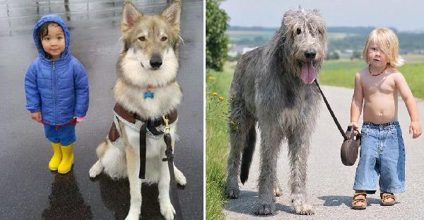 20 ภาพยืนยันว่าหมาเป็นทั้งเพื่อนสนิท พี่เลี้ยง และบอดี้การ์ด ให้กับลูกน้อยดีที่สุด