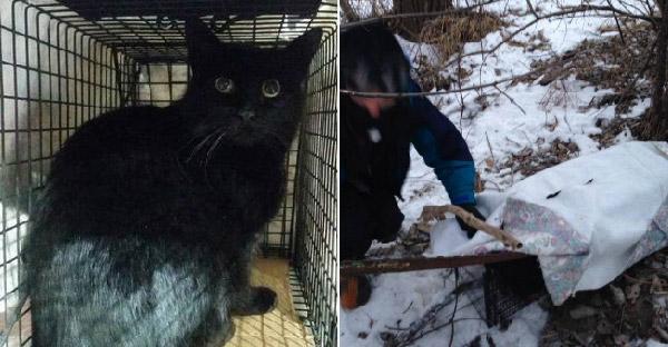 ชายใจดีช่วยแมวดำใกล้ตายติดหล่มหิมะ ก่อนรู้ทีหลังว่ามันหนีออกจากบ้านมานานแรมปี