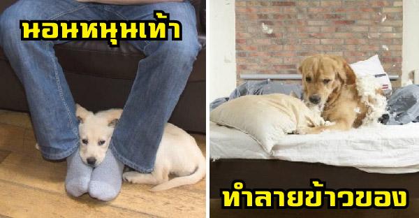 9 พฤติกรรมสุนัขที่คนเลี้ยงควรรู้ไว้ แล้วจะเข้าใจสุนัขมากยิ่งขึ้น