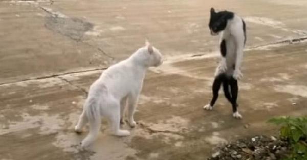 7 เหตุการณ์แมวเหมียวป่วนจนได้เรื่อง ที่กลายเป็นเรื่องขำขันบนโลกออนไลน์