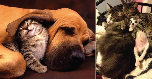 20 ภาพความรักสุดหวานชื่นของหมา-แมว แล้วคุณจะรู้ว่าพวกมันสนิทกันมากกว่าที่คุณคิด