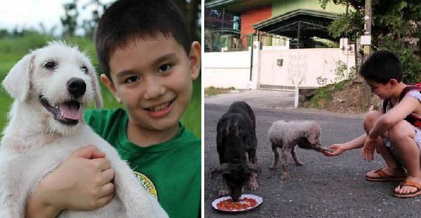 เด็กน้อยขโมยอาหารออกจากบ้าน พ่อสงสัยจึงแอบตามมาถึงรู้ว่าเอามาให้สุนัขจรจัดกิน