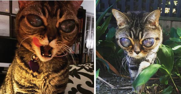 """แมวที่มีดวงตาเหมือน """"เอเลี่ยน"""" กับความจริงที่ทำให้คุณต้องน้ำตาซึม"""
