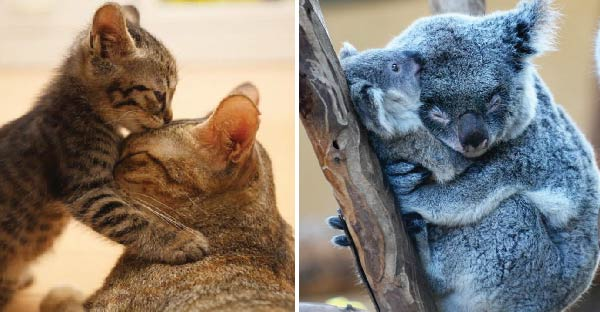 19 ภาพความผูกผันระหว่างแม่กับลูกของสัตว์โลก ที่เห็นแล้วอยากกลับไปกอดแม่แน่นๆจัง T^T