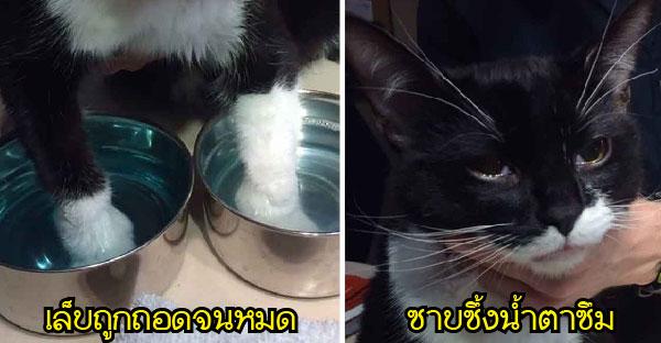แมวน้อยถูกดึงเล็บออกหมด ก่อนถูกช่วยเหลือจนซาบซึ้งน้ำตาซึม