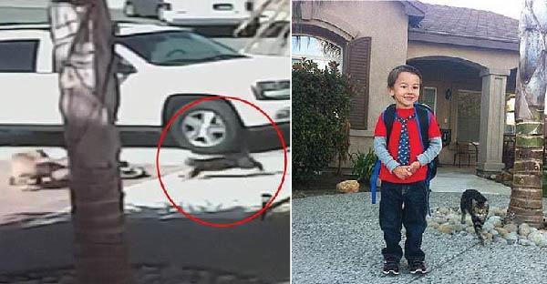 เด็กออทิสติกวัย 6 ขวบรอดชีวิตจากหมาจรจัดที่วิ่งเข้าใส่ เพราะได้เจ้าเหมียวฮีโร่โดดเข้ามาช่วยไว้