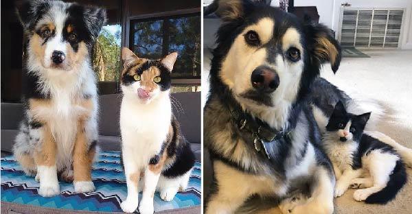 แล้วคุณจะรู้ว่าหมา-แมว เหมือนกันมากกว่าที่คุณคิด !!